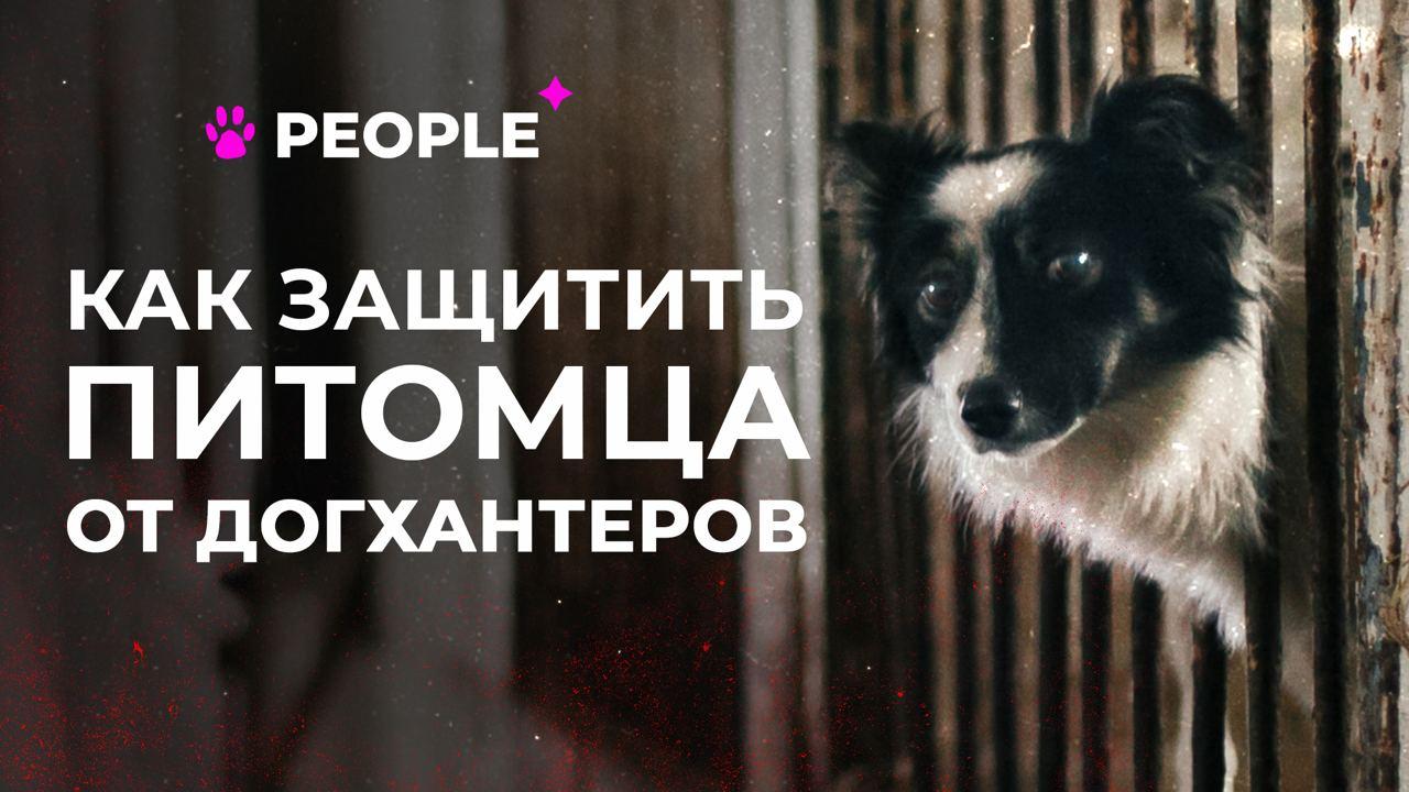 Краткий гайд PEOPLE: как уберечь животных от отлова